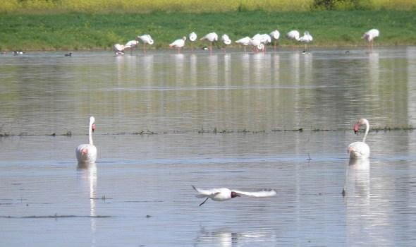 El Centro del Agua de Daimiel celebra el Día de los Humedales