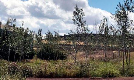 El Consorcio RSU de Ciudad Real  celebra el Día Mundial del Medio Ambiente, plantando 200 chopos en su planta de tratamiento