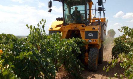 """La vendimia 2018 dejará """"un 20% o más"""" de uva que la pasada campaña en Daimiel"""