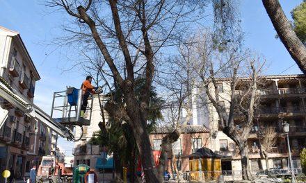 Parques y Jardines de Daimiel comienza con la campaña de poda del arbolado municipal